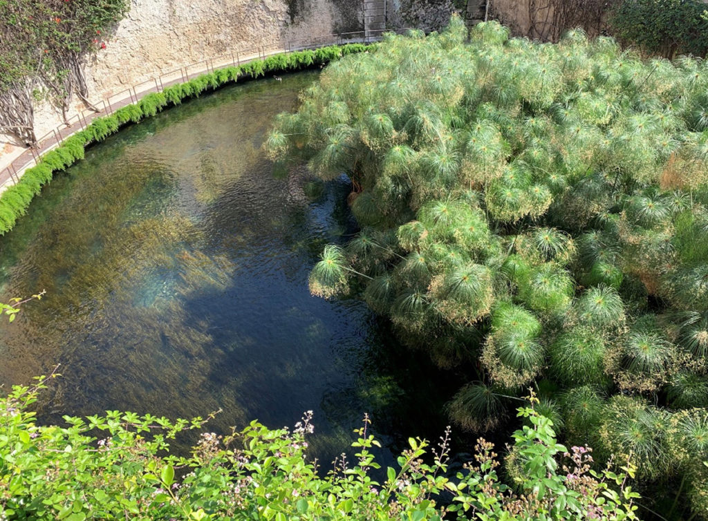 The origins of natural ingredients and herbs with natural pond water.